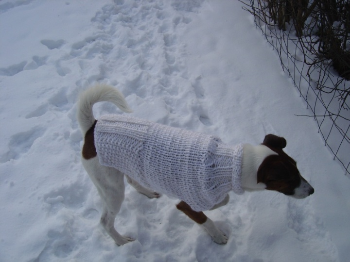 Megztinukas suniukui