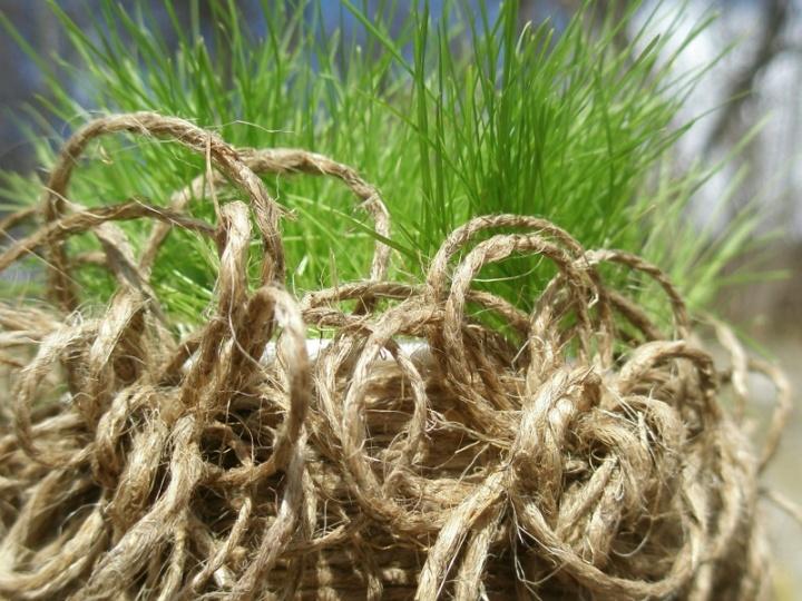 Velykinė žolė pasipuošusiame indelyje :)