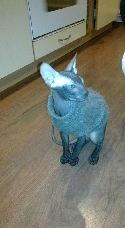 megztinis katinui