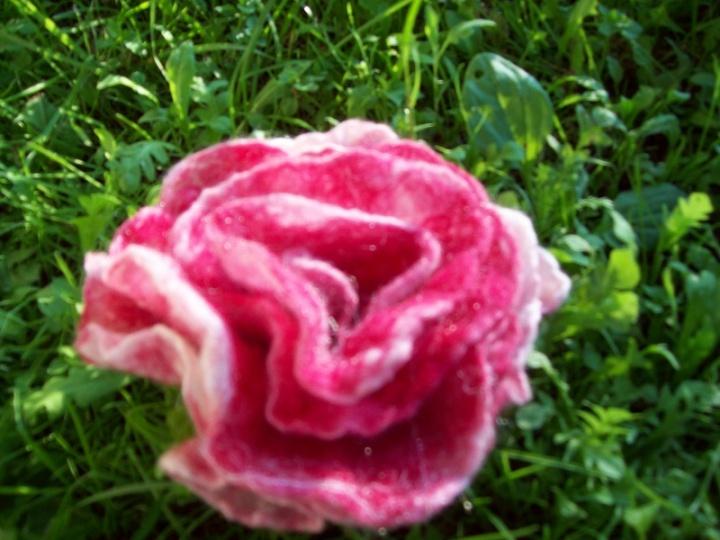 rožė nuostabioji