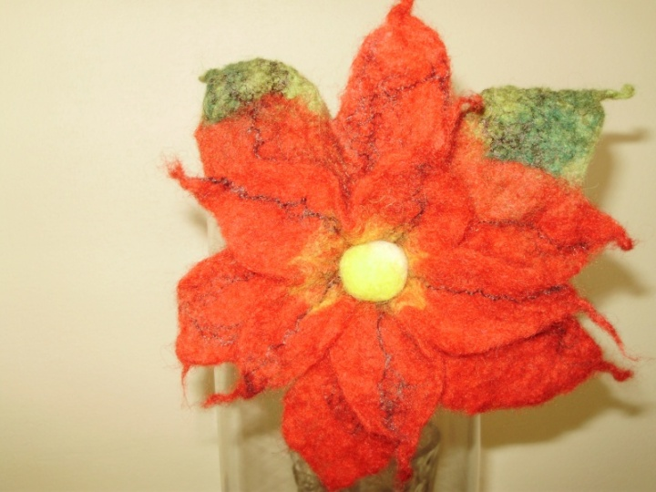 Sagė-Kalėdinė gėlė