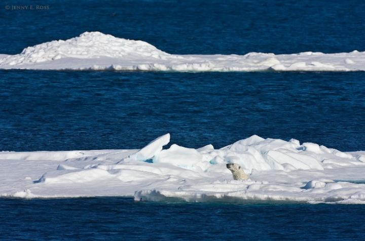 """Pirštinės """"Arkties vandenynas """""""