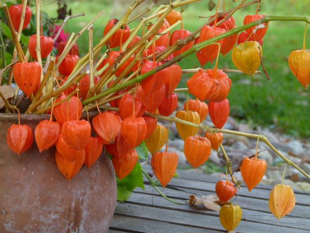 """velta rankinė """"Kai myli rudenį"""""""