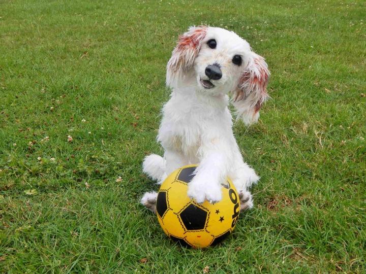 Nertas šuo / realaus dydžio pozuojantis kolekcinis žaislas - pagal nuotrauką