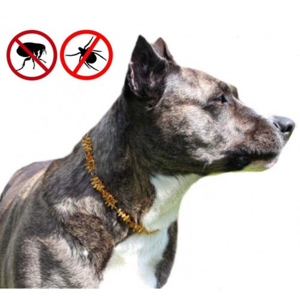 gintarinis antkaklis šuniui- apsauga nuo parazitų