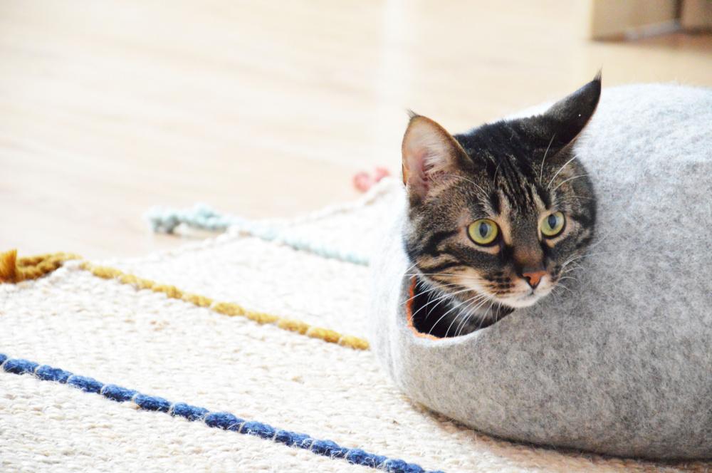 Katės guolis BUBBLE