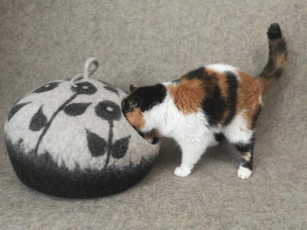 Katės namas