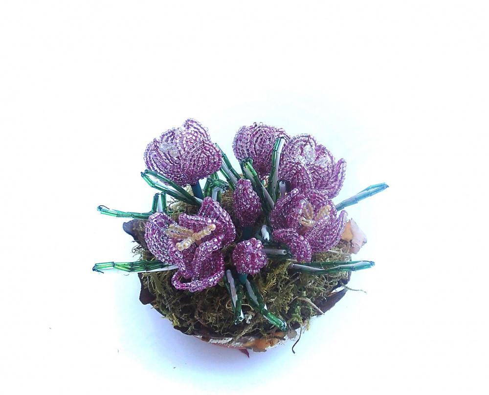 Krokai violetiniai-rožiniai