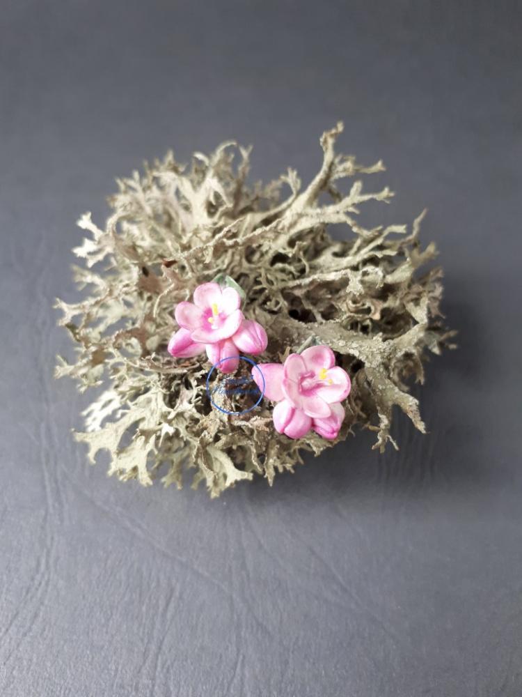 Maži rožiniai gėlių auskarai