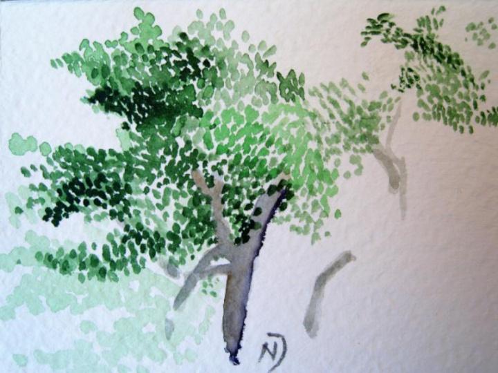 Medis pavasarį