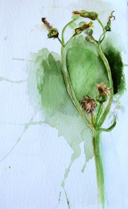 Pievos augalėlis